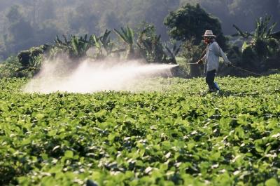 Taiwán entrega US$143.000 para combatir plagas en cítricos en Centroamérica