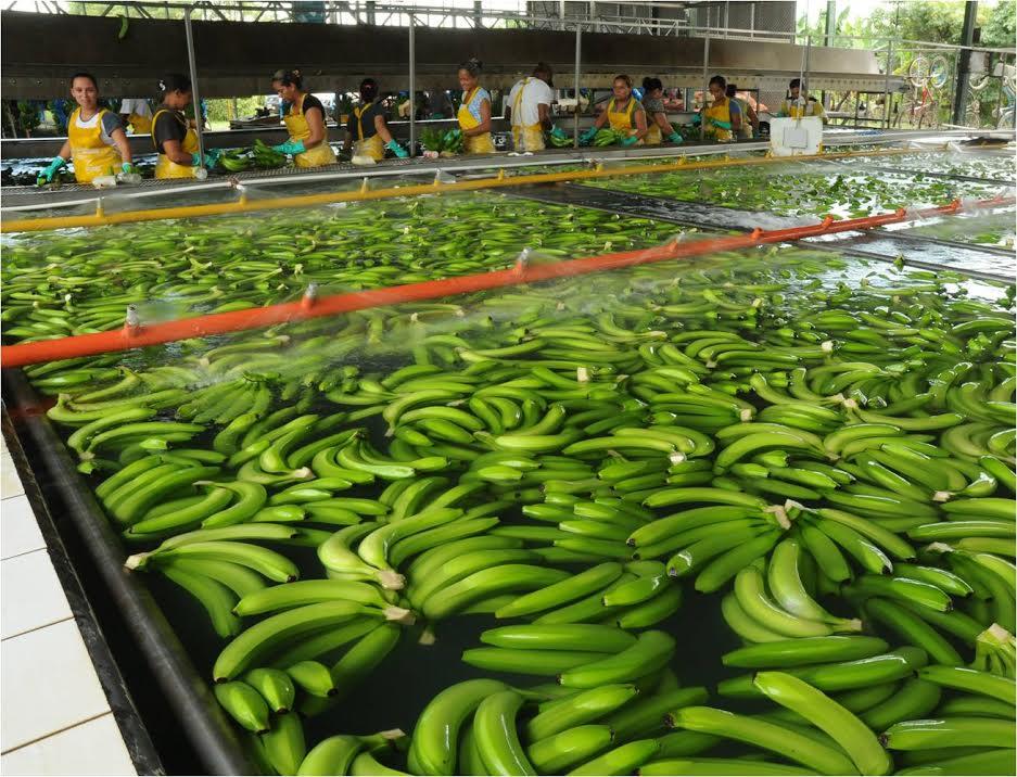Costa Rica: 40 mil trabajadores bananeros sufren consecuencias por bloqueos