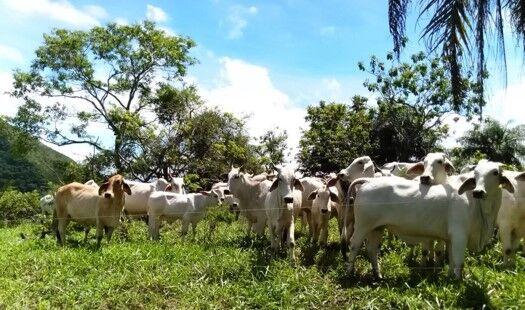 Ganadería costarricense avanza hacia la eco-competitividad y la descarbonización