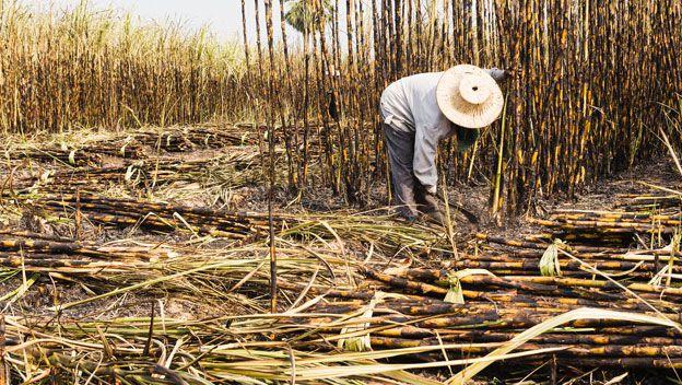 Nicaragua: Proyectan ligero descenso en zafra azucarera 2018-2019