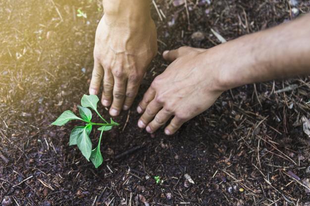 Agricultura, el sector que emplea el mayor porcentaje de menores de edaden América Latina
