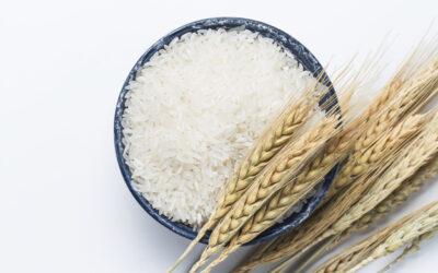 Honduras: Piden importar más arroz ante caída de la producción