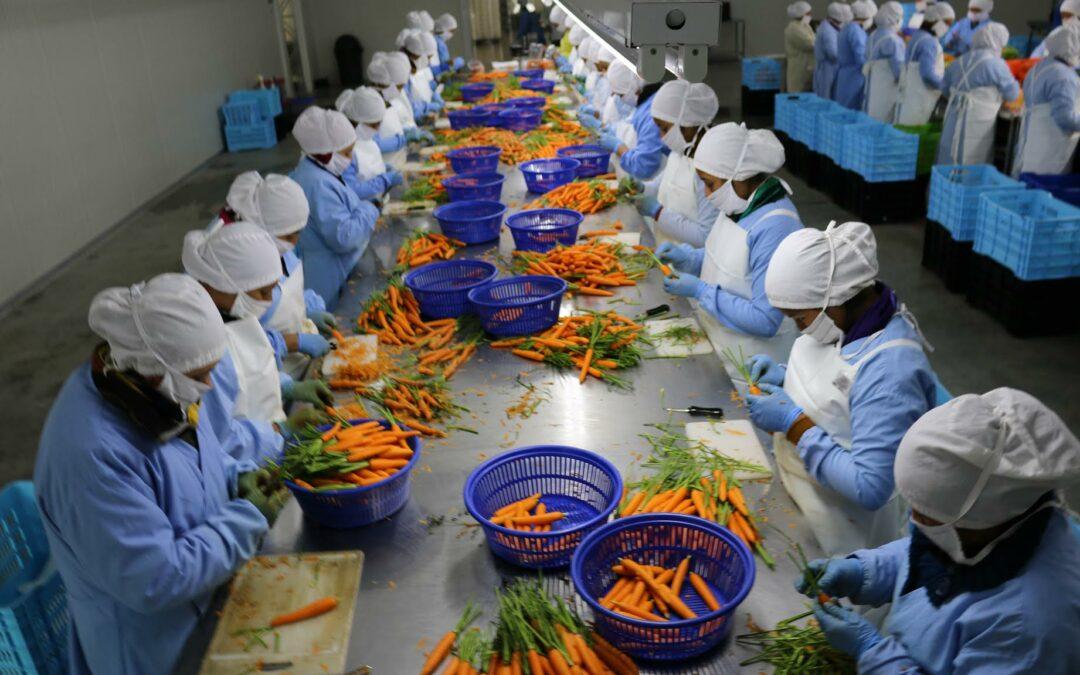 Panamá coordina con China nuevos proyectos de tecnología para el agro