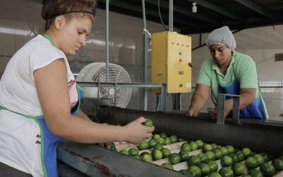 Las claves para enfrentar desafíos del comercio global de alimentos y seguridad alimentaria