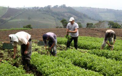 Ante la emergencia, el IICA prioriza y fortalece la seguridad alimentaria y la sostenibilidad del agro