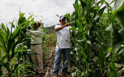 Honduras: Gobierno invertirá crédito de US$55 millones del BM para fortalecer sector agroalimentario y agroindustrial