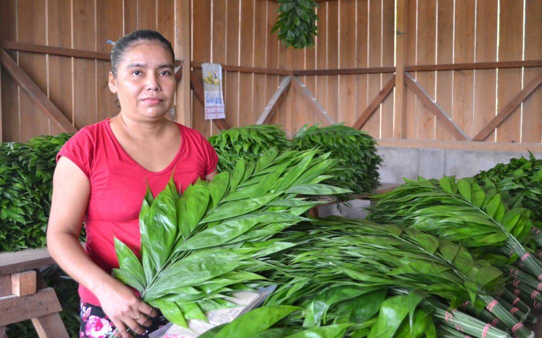 Guatemala: Zona de Adyacencia Guatemala-Belice agregarán valor a productos agrícolas y se incorporarán a la cadena de exportación