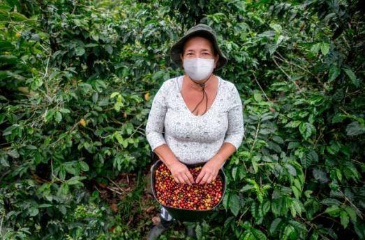 Impulsan a pequeños productores de El Salvador a diversificar ingresos para hacer frente al impacto económico de la pandemia
