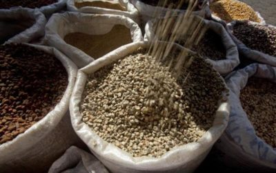 COVID-19 plantea un nuevo reto al sector cafetalero de Nicaragua