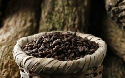 IICA y la UE buscan mitigar efectos de COVID-19 en sector café centroamericano