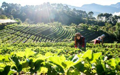 Institucionalidad financiera enfocada al sector productivo de Chile, México y Costa Rica: experiencias útiles para la reactivación económica