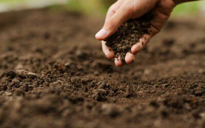 Programa costarricense de Pago por Servicios Ambientales gana premio global