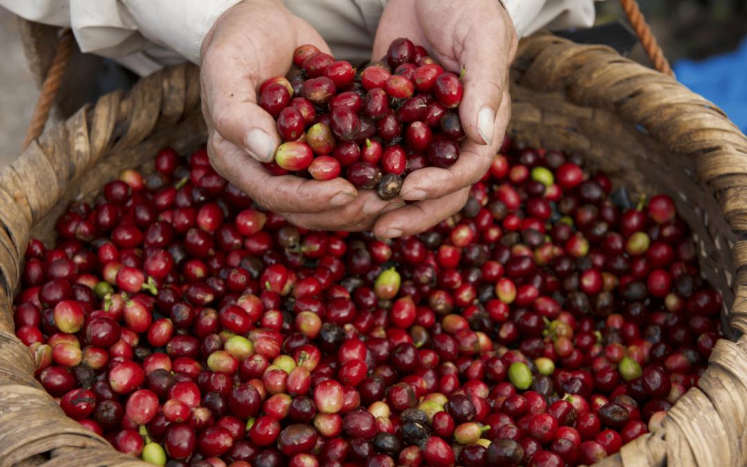 Costa Rica celebra en octubre el bicentenario de la primera exportación de café