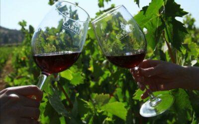 Mes del Merlot: 5 características del vino Merlot