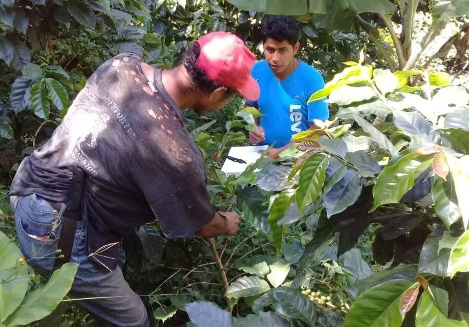 Planes de negocio, una herramienta para avanzar hacia la sostenibilidad en el sector cafetalero de Nicaragua
