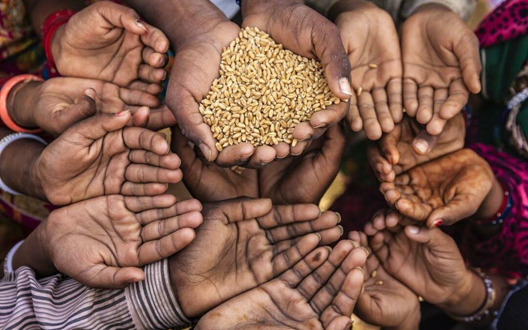 El mundo desperdició 931 millones de toneladas de alimentos en 2019, según ONU