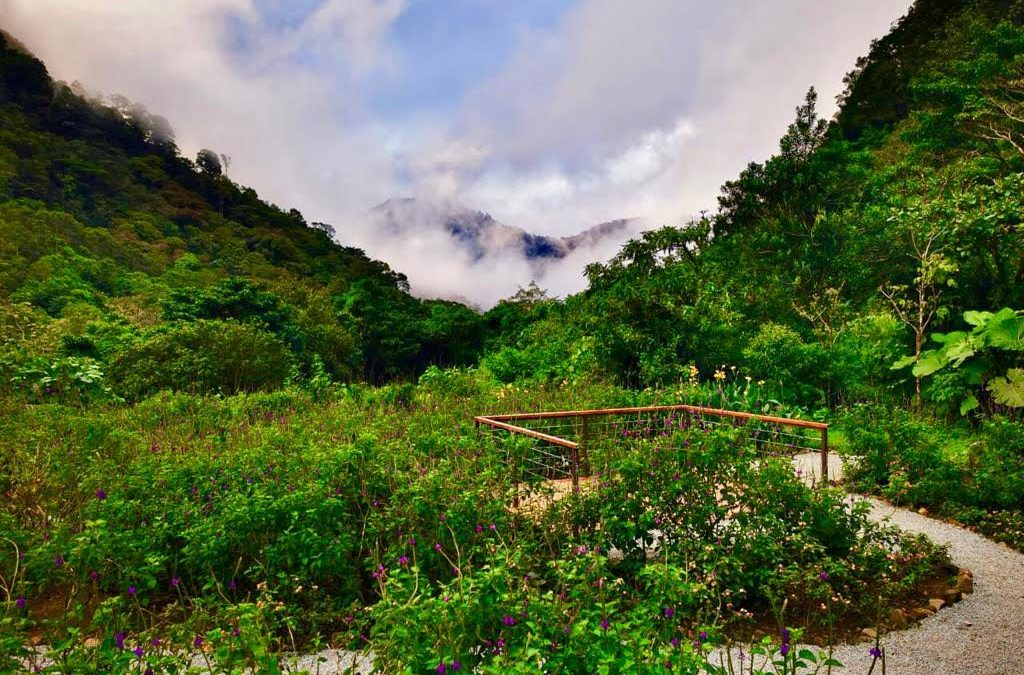 Hotel costarricense implementa tres grandes iniciativas ambientales que contribuyen a la preservación del bosque nuboso
