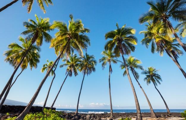 National Geographic inaugura su cuenta de TikTok con vídeo de las bellezas de Costa Rica