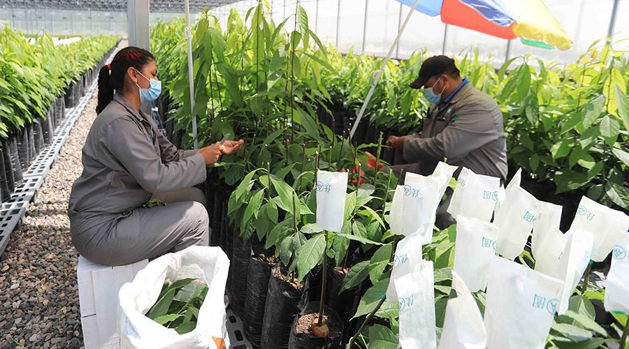 FAO: los proyectos ambientales pueden generar más empleo y crecimiento en América Latina y el Caribe