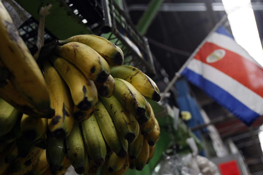 Costa Rica aumentó las exportaciones de banano en un 7% pese a la pandemia