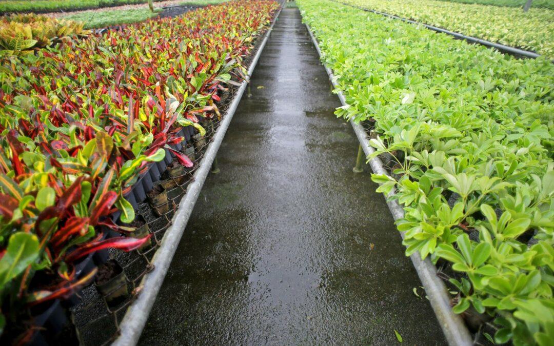 Sector de plantas, flores y follajes de Costa Rica busca abrir oportunidades en mercado europeo