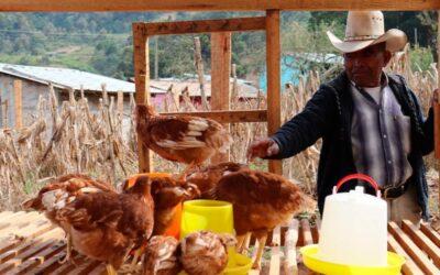Honduras: Más de 4.000 familias serán beneficiadas en 2021 con programa Especies Menores de Sedis