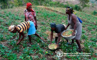 Advierten del preocupante aumento de la inseguridad alimentaria aguda en 4 países de Centroamérica