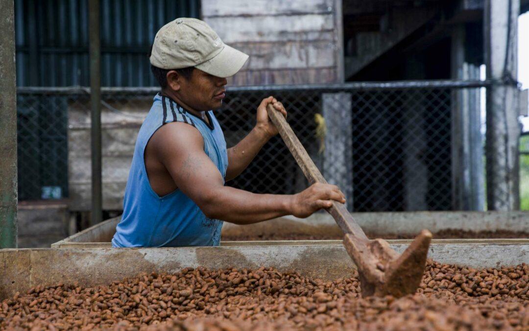 Los cacaoteros de Centroamérica apelan a la calidad para sobrevivir a la pandemia