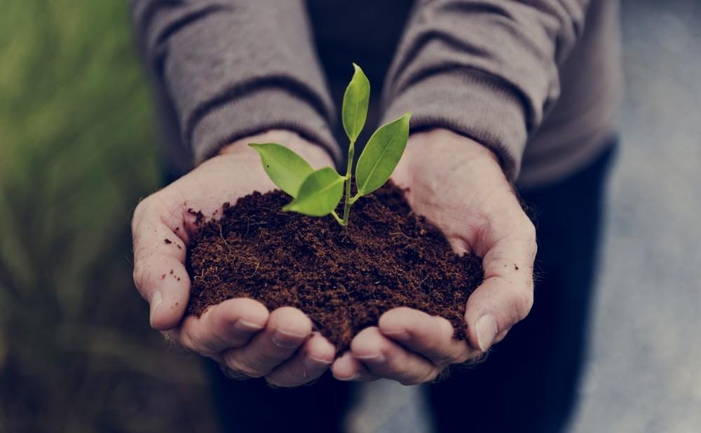 Sostenibilidad: ¿Por qué es importante para las pymes?
