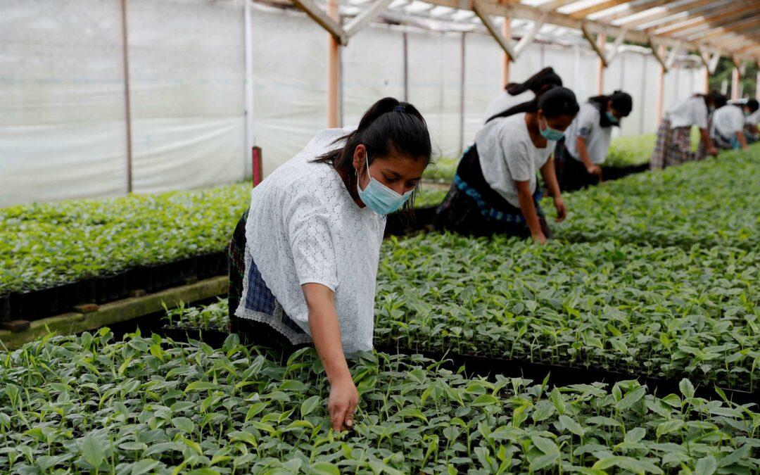 Inversiones en los sistemas agroalimentarios estimularán la recuperación económica en la pospandemia