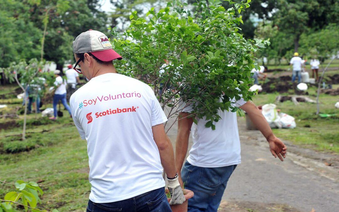 Costa Rica: Scotiabank recibe reconocimiento por proyecto de rearborización en La Sabana