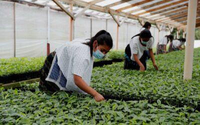 EE.UU. propone a Latinoamérica una estrategia agrícola alternativa a la europea